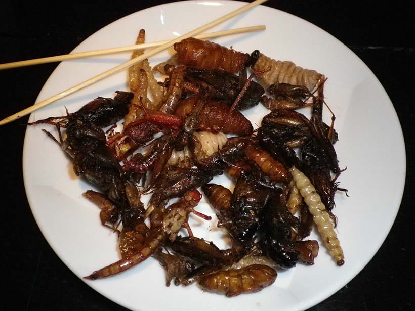 Thai plate for eating insects