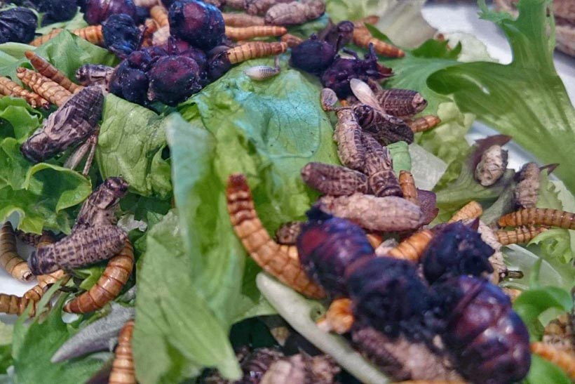 plate full of edible insects